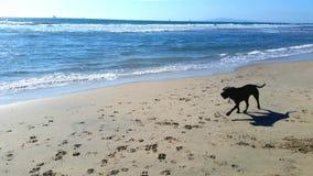 Psia plaża Zdjęcia Stock