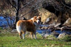 Psia pobliska rzeka zdjęcie royalty free