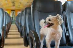 Psia podróż pociągiem Zdjęcie Stock