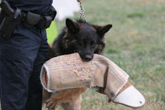 psia policja Fotografia Stock