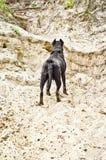 Psia pozycja na piaskowatej falezie obraz royalty free