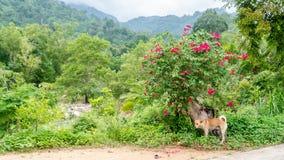 Psia pozycja obok kwiatonośnego krzaka zdjęcia royalty free