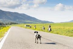 Psia pozycja w drodze fotografia stock