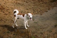 Psia pozycja w trawie Zdjęcia Stock
