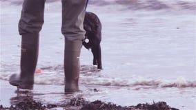 Psia przynosi piłka od morza Obrazy Stock