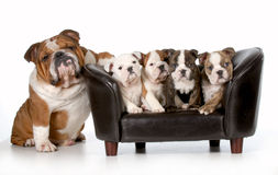 Psia rodzina Obrazy Royalty Free