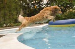 psia rodziny obrazy royalty free