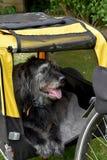 Psia rower przyczepa Zdjęcie Stock