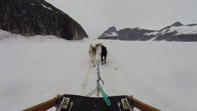 Psia sanie przejażdżka na toboganie przy Alaska lodowem zbiory