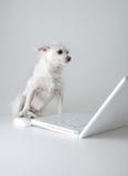 psia sieć surfuje Obrazy Stock