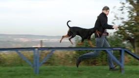 Psia sport zwinność zbiory