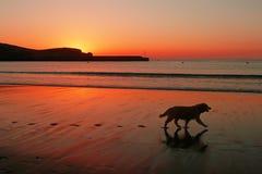 Psia sylwetka i odciski stopy na plaży przy zmierzchem Obrazy Stock