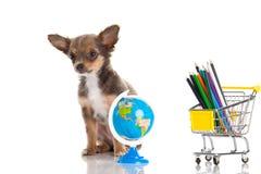 Psia szkoła odizolowywająca na białym tle Zdjęcie Stock