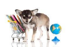 Psia szkoła wymyśla odosobnionego na białym tle Zdjęcia Stock