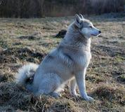 psia trawa fotografia stock