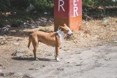 Psia trwanie pobliska droga w Gwatemala Obrazy Royalty Free