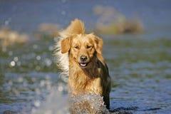 psia wody zdjęcia stock