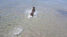 psia wody Zdjęcie Stock