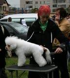 Psia wystawa Fotografia Stock