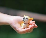 psia zabawka Obrazy Royalty Free