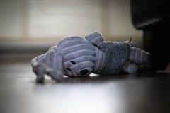 Psia zabawka na podłodze smutnej obraz stock