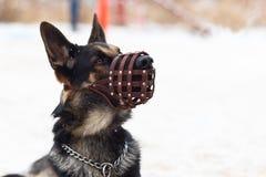 Psia zima w ochronnej masce, kaganiec obrazy royalty free