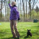 Psia zwinność na greenfield Zdjęcie Royalty Free