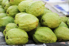 Psidium guajava groene guave Royalty-vrije Stock Fotografie