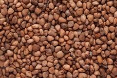 Psidium guajava (guava) Stock Image