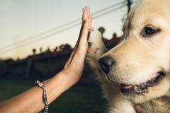 Psie chwianie ręki z osobą obrazy stock