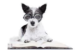Psie czytelnicze książki obrazy stock