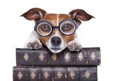 Psie czytelnicze książki zdjęcia stock