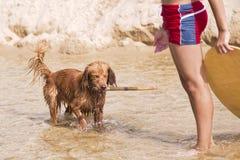 Psie sztuki na plaży Zdjęcie Stock