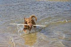 Psie sztuki na plaży Fotografia Stock