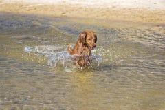 Psie sztuki na plaży Fotografia Royalty Free