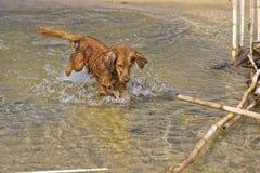 Psie sztuki na plaży Obrazy Stock