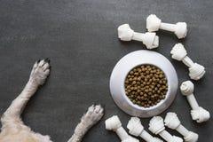 Psiego jedzenia i psa łapa Zdjęcie Royalty Free
