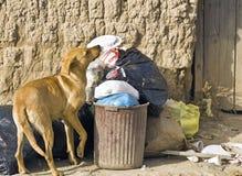 psiego jedzenia przyglądający bezpański Obrazy Royalty Free