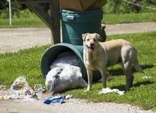 psiego jedzenia przyglądający bezpański Zdjęcia Stock