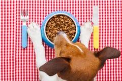 Psiego jedzenia puchar zdjęcia royalty free