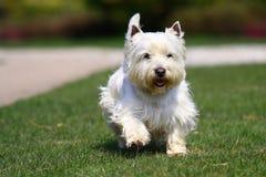psiej trawy zieleni biel Zdjęcia Royalty Free