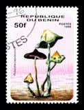 Psilocybe zapotecorum,蘑菇serie,大约1996年 库存图片