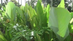 Psittacorum van Heliconia van de parkietbloem Installaties en Bloemen en andere bloemen in een tropische tuin stock video