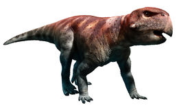 Psittacosaurus arkivbilder