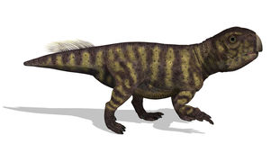 Psittacosaurus Dinosaur Stock Image