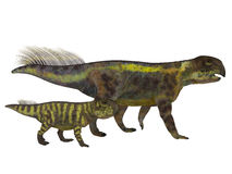 Psittacosaurus Dinosaur with Juvenile. Psittacosaurus was a Ceratopsian herbivorous dinosaur that lived in Asia in the Cretaceous Period Royalty Free Stock Images