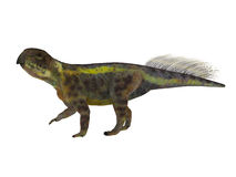 Psittacosaurus Dinosaur Side Profile. Psittacosaurus was a Ceratopsian herbivorous dinosaur that lived in Asia in the Cretaceous Period Royalty Free Stock Images