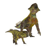 Psittacosaurus Dinosaurs on White Stock Photo