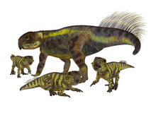 Psittacosaurus Mother with Offspring. Psittacosaurus was a Ceratopsian herbivorous dinosaur that lived in Asia in the Cretaceous Period Royalty Free Stock Image
