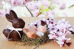 Påskbakgrund, kortet med easter ägg, chokladkaninen och rosa färger fjädrar blomningar Royaltyfria Bilder
